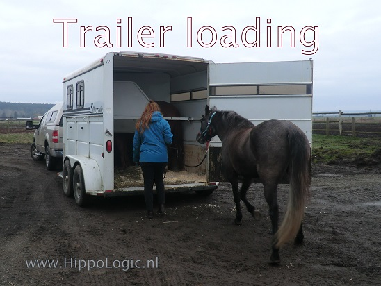 _trailer loading_hippologic
