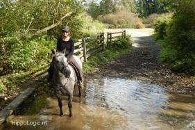 _cooperative_horse_hippologic