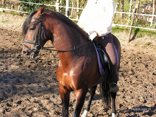 clicker training from the saddle can help improve your relationship