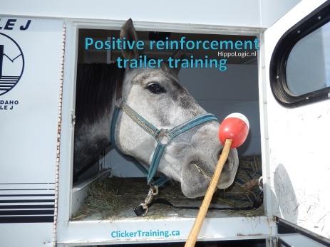 _trailer_training_hippologic.jpg