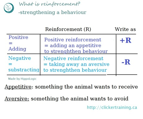 reinforcement_hippologic